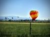 balloon2011a