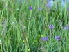 wildflowers800