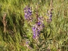 wildflowers800b