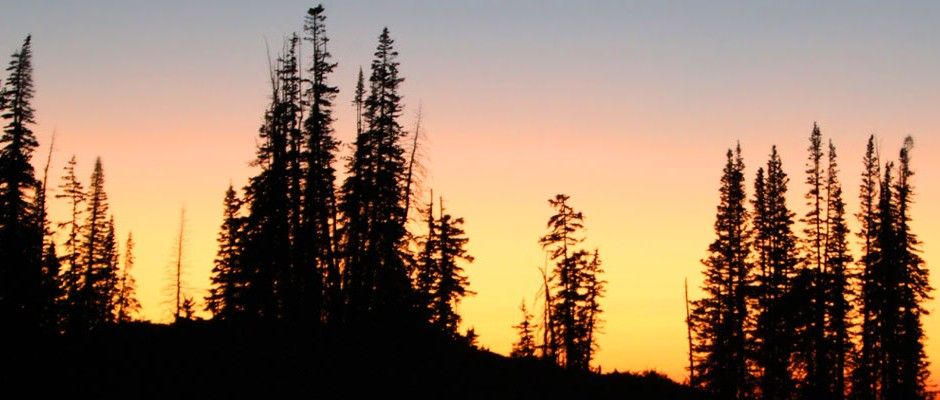 Forest-Sunset-1000