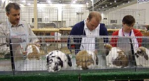Color Country ARBA Rabbit Show @ Triple C Arena