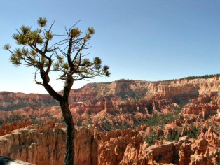 lonely-tree-in-bryce-canyon