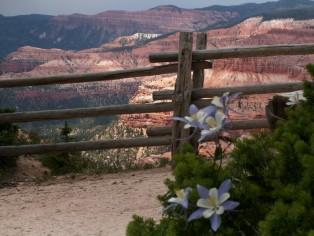 columbines-at-cedar-breaks-national-monument