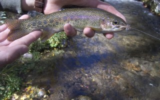 panguitch-utah-112-fishing