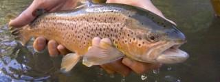 panguitch-lake-4-fishing