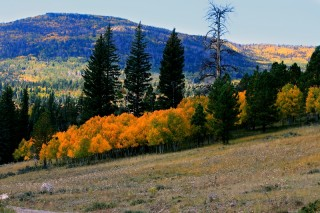 panguitch-lake-fall