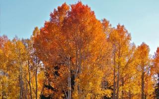 fall-colors-800